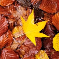 Palete de Outono